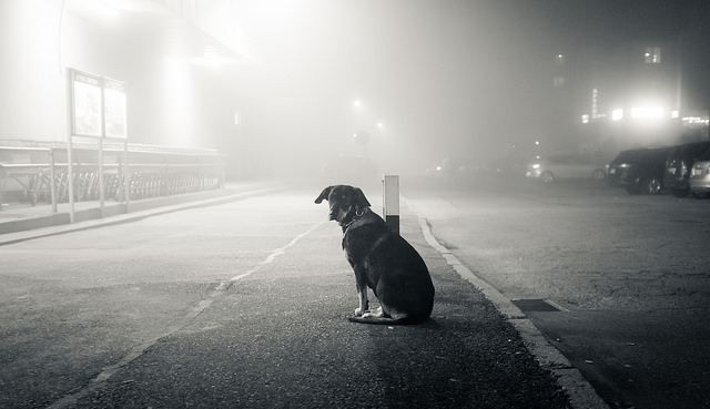 Foggy Doggy | Day 95 / 365